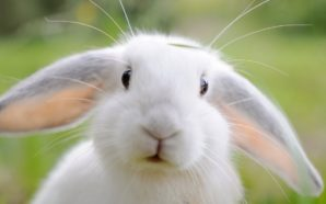 Une femme s'interroge sur le lesbianisme de sa lapine